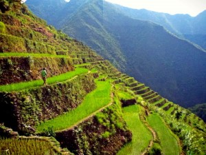 GUIDE TO batad rice terraces