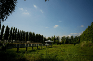 EDL Farmhouse is a premiere farm tourism destination in Tarlac