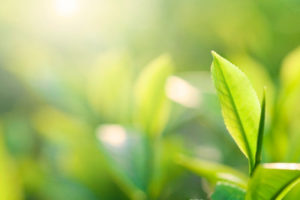 Frost & Sullivan Examines Biostimulants and their Projected Two-fold Growth