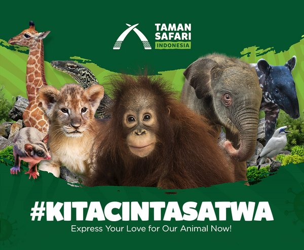 #kitacintasatwa, Taman Safari Indonesia Invites People to Help Animals