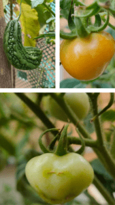 gardening therapeutic pandemic
