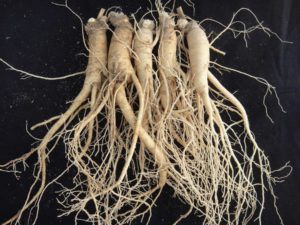 The Korea Ginseng Association Launches Promotional Activities to Publicize the Designation of 'Farming and Medicinal Usage of Korean Ginseng' as Intangible Cultural Heritage